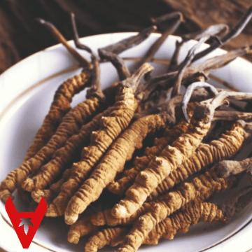 Cordyceps Sinensis & Militaris Benefits (& Side Effects)